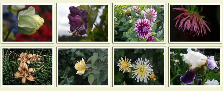 цветочные фотообои