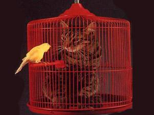 кот и птичка