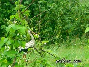 аист прогулка по огороду