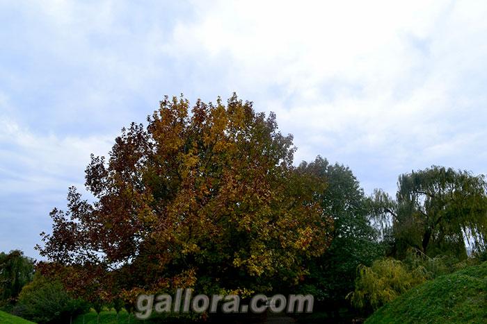 Осенний пейзаж-05