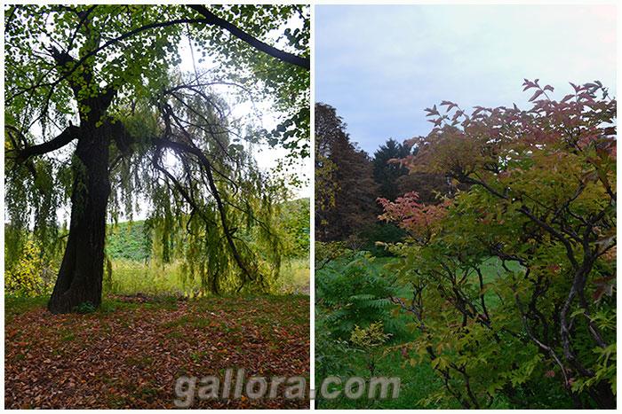 Осенний пейзаж-07